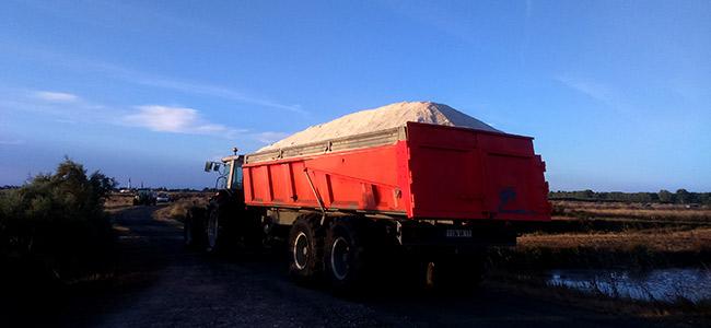 Chargement de la récolte de sel dans des camions