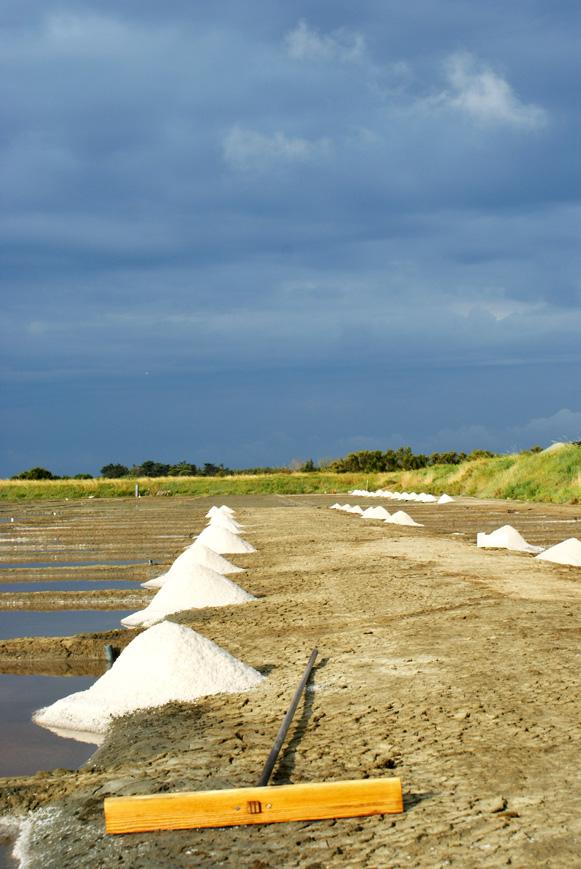 Salicornes de l'île de Ré