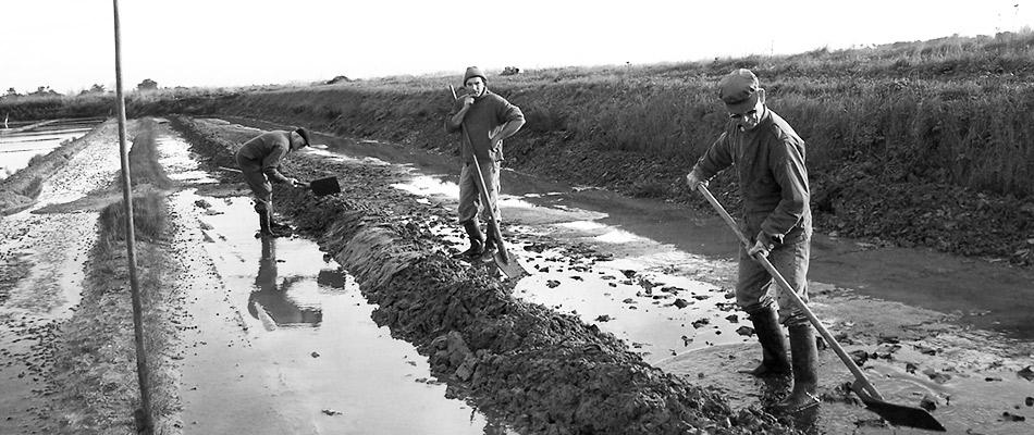 Préparation des bassins des marais salants