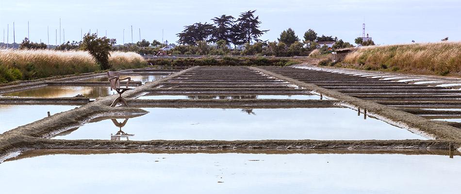Marais salants de l'Île de Ré