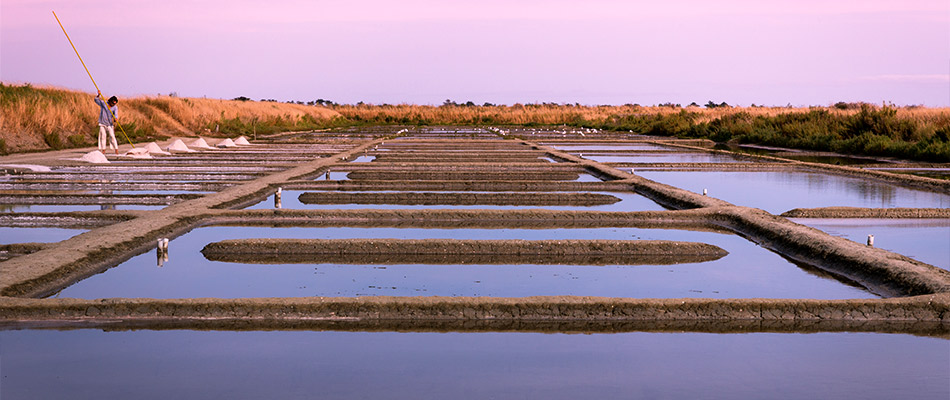 Récolte de tonnes de Gros sel
